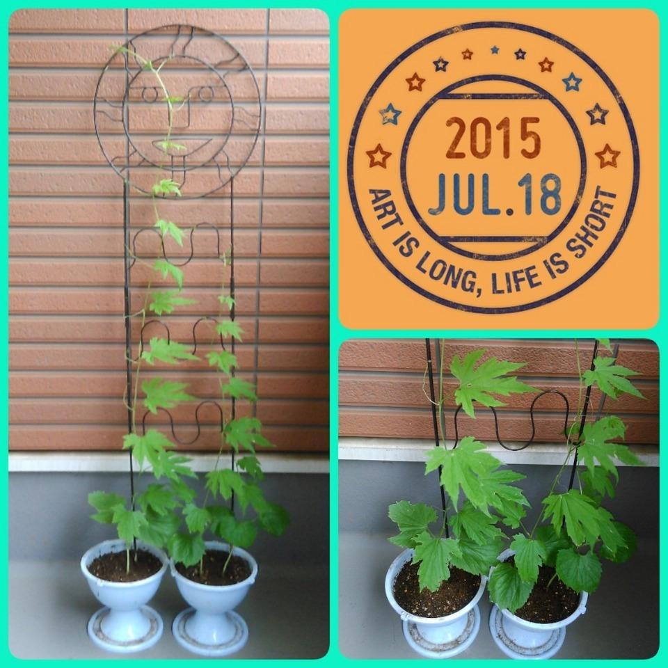 2015-07-18-09-46-45_deco.jpg