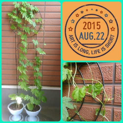 2015-08-22-10-41-11_deco.jpg