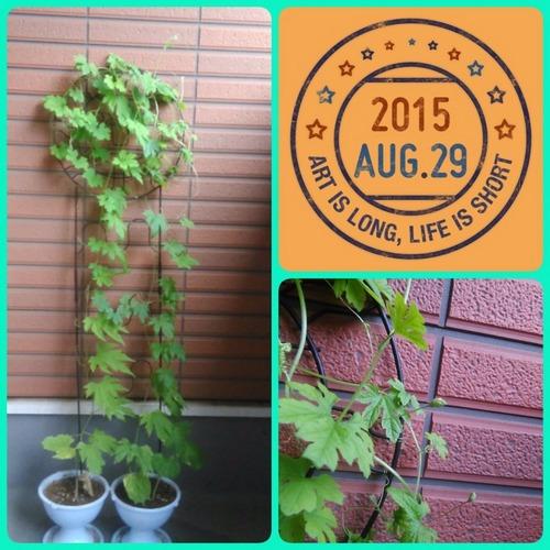 2015-08-29-10-14-02_deco.jpg