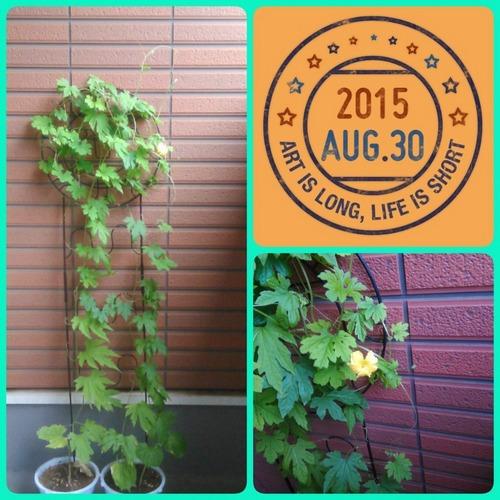 2015-08-30-09-37-34_deco.jpg