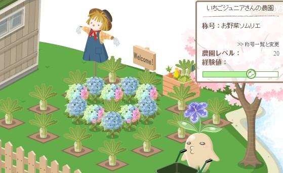 2012y07m21d_レインボー紫陽花.jpg