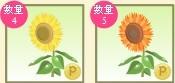 2012y08m10d_向日葵ゲット.jpg