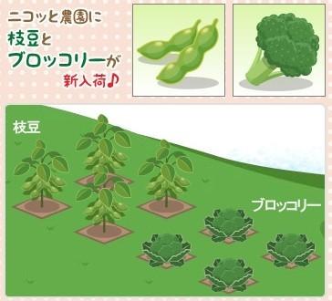 2012y08m16d_枝豆とブロッコリ.jpg