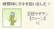 2012y08m22d_王冠サボテンレア種拾った.jpg