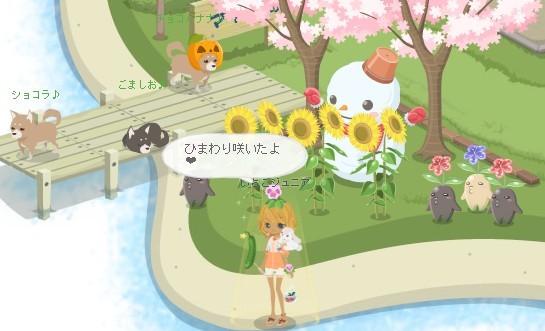 2012y08m24d_向日葵咲いたよ.jpg