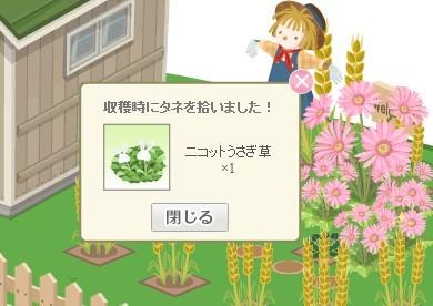 2012y09m06d_うさぎ草の種ゲット.jpg