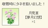 2012y09m08d_月見草レア種.jpg