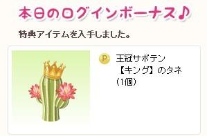 2013y01m31d_王冠サボテン.jpg