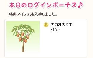 2013y02m08d_カカオの種♪.jpg
