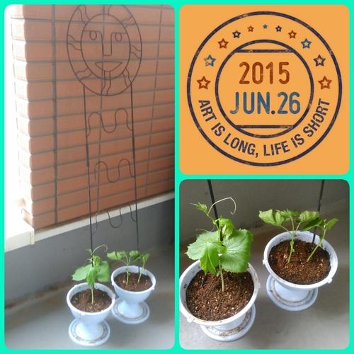 2015-06-26-09-22-22_deco.jpg