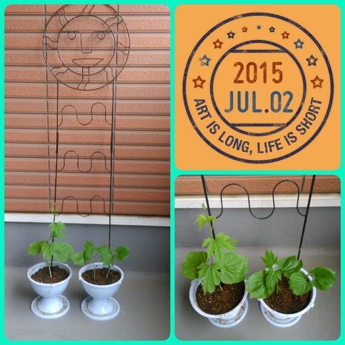 2015-07-02-09-59-27_deco.jpg