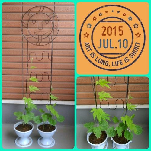 2015-07-10-06-43-00_deco.jpg
